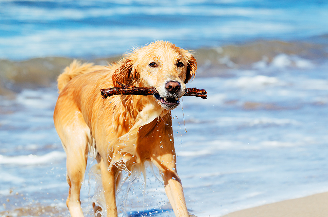 Dog Friendly Hotels Virginia Beach
