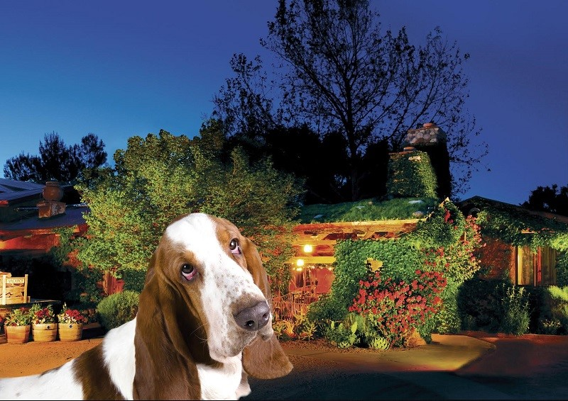 Pet Friendly Hotels in Arizona