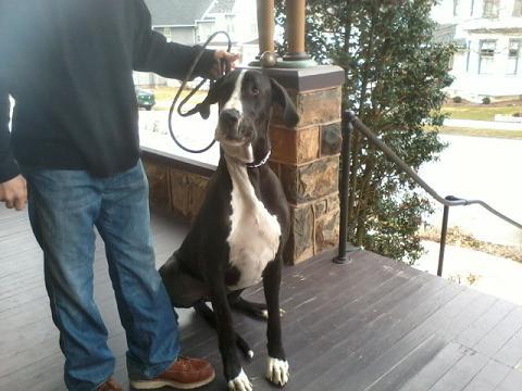 Pet Friendly Hotels in Pennsylvania