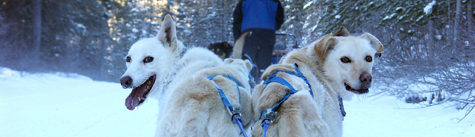 Yukon Territory Pet Friendly Hotels Lodging