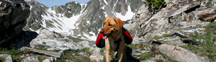 Pet Friendly Hotels in Alaska