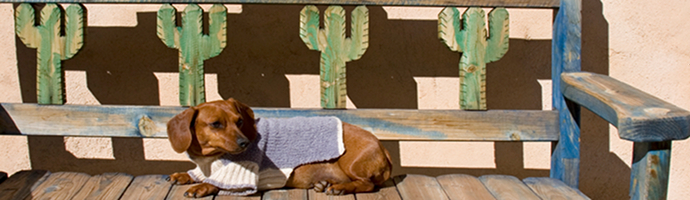 Arizona Pet Friendly Hotels Lodging