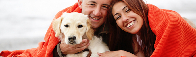 California Pet Friendly Hotels Lodging
