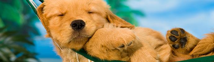 Florida Pet Friendly Hotels Lodging
