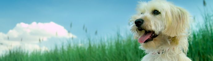 Iowa Pet Friendly Hotels Lodging