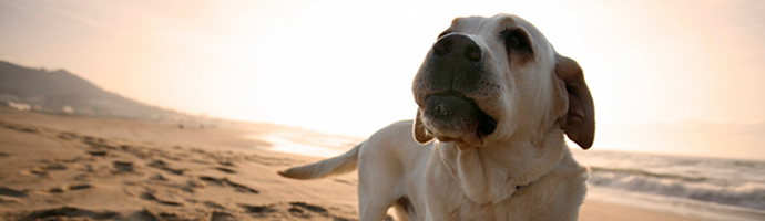 North Carolina Pet Friendly Hotels