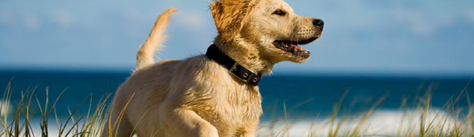 South Carolina Pet Friendly Hotels Lodging