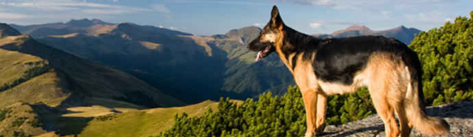 Pet Friendly Hotels in Utah