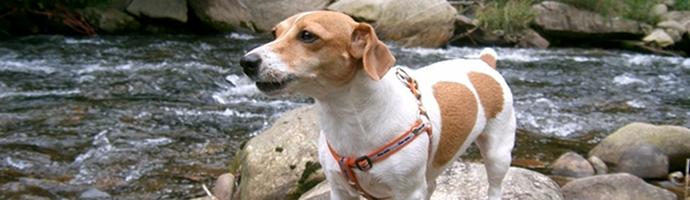 West Virginia Pet Friendly Hotels Lodging